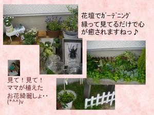 花壇でガーデニング